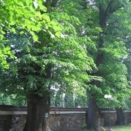 bujakow-kosciol-lipy