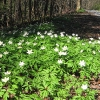 bukowa-dolina-kwiatki