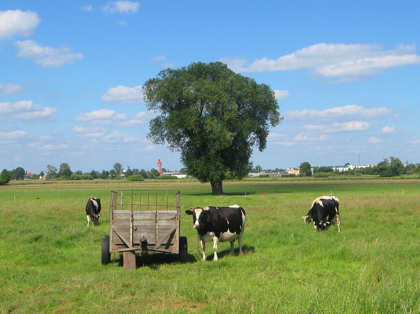 Chojęcin-Wieś – Na Szlaku