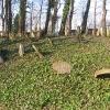 cieszyn-stary-cmentarz-zydowski-4