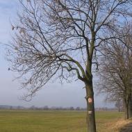 czatkowice-drzewo.jpg
