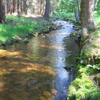 rzeka-bystrzyca-3.jpg