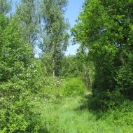 droga-338-kwiatkowice-06