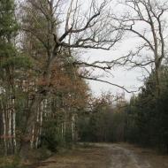 droga-slupkowa-e6