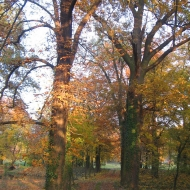 galow-palac-park