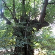 gola-wielka-lesne-stawki-06