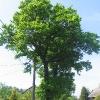 gora-drzewo