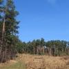 gozdnik-las