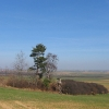 gozdnik-widok