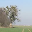 jankowice-male-olesnica-mala-09