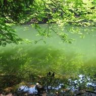 jeziorka-duszatynskie-jeziorko-dolne-2.jpg