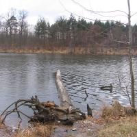 jezioro-dziewicze-3.jpg
