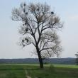 kadlub-swiete-15