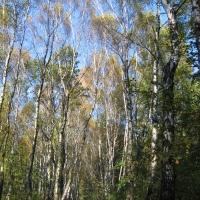 katowice-park-stachonia-3.jpg