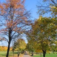 katowice-park-stachonia-4.jpg