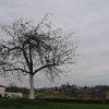 kobyla-widok-6