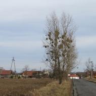 kol-strzelce-m5