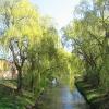koscian-rzeka-obra-ul-pilsudskiego-2
