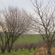 krakowiany-bolescin-1