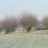 krakowiany-przed-1