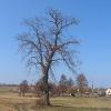 kraszow-widok