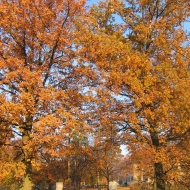 krobielowice-palac-park-1