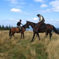 kucalowa-hala-konie-3.jpg