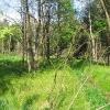 lasy-murckowskie-laki-nowe-struga