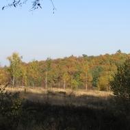 las-bukowy-widok-1