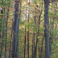 las-bukowy-widok-2