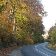 las-bukowy-widok-3