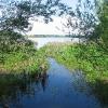 las-roszkowice-jezioro-laka