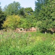 lasowice-male-ruiny-domu