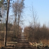 lasy-zlotowskie-zlotow-01