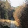 lasy-zlotowskie-zlotow-05