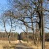 lasy-zlotowskie-zlotow-10