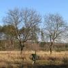lasy-zlotowskie-zlotow-11