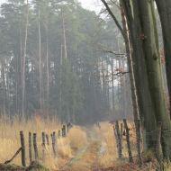 lasy-zlotowskie-13