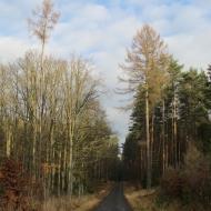 lasy-zlotowskie-11