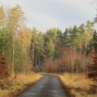 lasy-zlotowskie-12