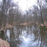 lasy-siechnickie-starorzecze-1.jpg