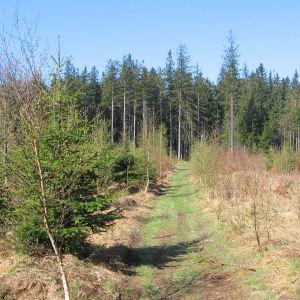 lesieniec-polana-1