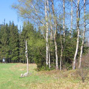 lesieniec-polana