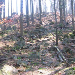 lesieniec-szlak-2
