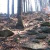 lesieniec-szlak-3