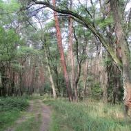 ue-lesne-stawki-kolo-goszcza-05