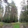 ue-lesne-stawki-kolo-goszcza-06