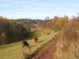 lewinska-czuba-widok-krowy-1.jpg