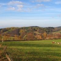 lewinska-czuba-widok-krowy-3.jpg