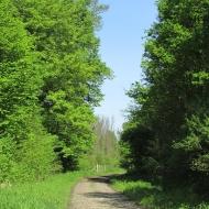 malczyce-droga-338-10